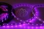 LED лента открытая, IP23, SMD 3528, 60 диодов/метр, 12V, цвет светодиодов розовый Neon-Night